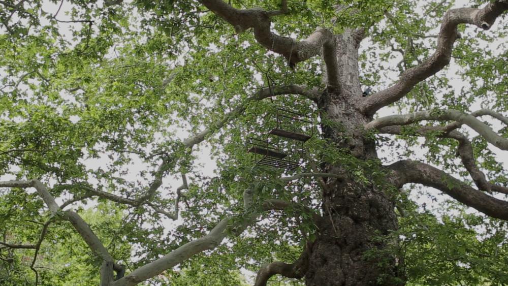 Balan oire mic l grazioli for L arbre qui pousse le plus vite